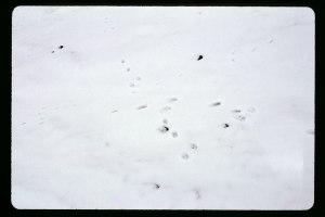 sporensneeuwTK46-kopie